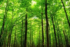 Oczyśćmy nasze lasy ze śmieci!