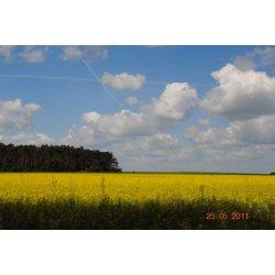krajobraz Kępna