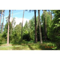 Zdjęcie lasów rychtalskich